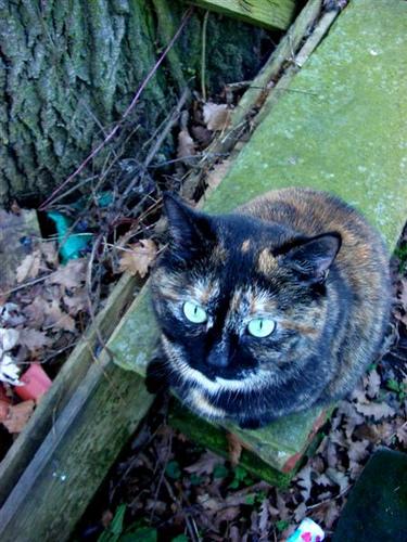 on a kitty walk (3)
