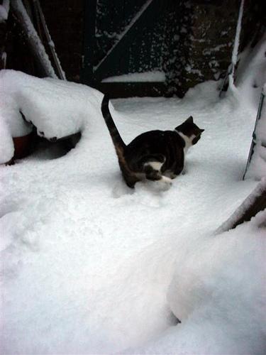 London snowday (3)